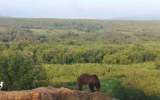 Камчатские жители: птицы, звери…